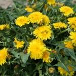 Wiosenne rośliny – bogactwo mikroelementów